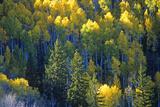 Autumn Colors Santa Fe National Park  NM