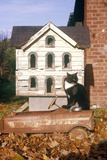 Black and White Cat Posing by Birdhouse  CO
