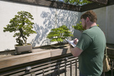 Artist Draws Japanese Bonsai Tree in National Arboretum  Washington DC
