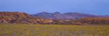 Spring Wildflowers  Death Valley  California