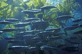 Monterey Aquarium  Monterey  CA