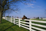 Horse Farm Where They Breed and Train Thoroughbred Race Horses it Is Called the Donamire Farm