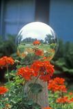 Geraniums and Garden Reflecting Ball  PA
