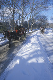 Horse Carriage Ride in Central Park  Manhattan  New York City  Ny after Winter Snowstorm