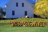 Harvested Pumpkins Along Scenic Route 100 in Autumn  VT