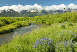 Mountain Water Runoff with Purple Lupine and Mountains in Centennial Valley  Near Lakeview  Mt