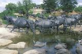Longhorn Cattle Sculpture in Pioneer Plaza  Dallas Tx