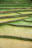 Terraced Rice Paddies in Kunming  People's Republic of China