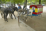 Donkeys Waiting to Be Ridden at Donkey Ride in Park  Paris  France