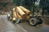 Logging Truck Accidental Log Spill  Kunming  Yunnan Province  People's Republic of China
