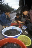 Eels for Sale at Bei Marketplace in Dali  Yunnan Province  People's Republic of China