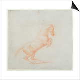 A Prancing Horse  Facing Right  1790 (Red Chalk on Paper)