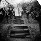Run-Down Stairway Among Leafless Cherry Trees