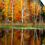 Autumn Colour Reflected in a Beaver Pond  Point Au Baril  Ontario  Canada