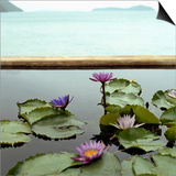 Water lilies in pond by ocean