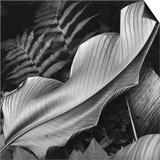 Leaf  1979