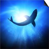Deep Under The Ocean  Looking Up Towards A Shark