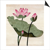 Lotus Blossom - 1