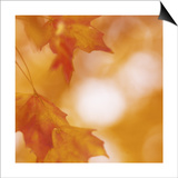 Autumn Leaves in Soft Sunshine I