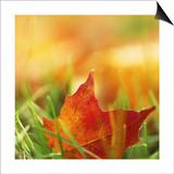 Red Leaf on Grass