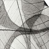 Leaf Designs III BW