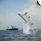 Tarpon Fishing  Miami  Florida