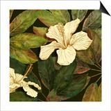 Hibiscus Leaves II