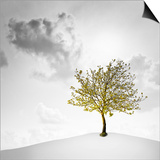 A Small Tree with Yellow Leaves on a White Background with Clouds