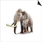 Woolly Mammoth  White Background