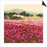 Le Jardin Rouge  Provence
