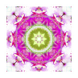 Water Lily Mandala 1