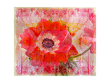 Red Anemone II