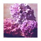 Violets Hyazinths