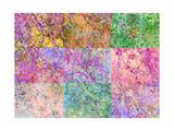 Trees Multicolor