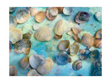 Seashells On Blue