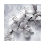 White Orchids Monotone