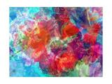 Anemone Multicolor