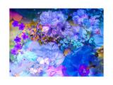 Lavender Blue Blossom Harmony