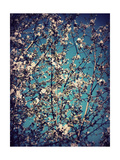 Spring Tree I