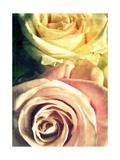 Roses In Light