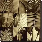 Tropical Leaves I
