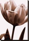 Tulip in Sepia I