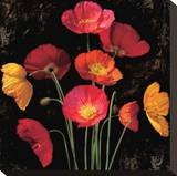 Poppy Bouquet I