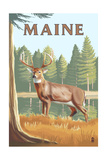 Maine - White Tailed Deer