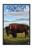 Golden  Colorado - Bison Scene