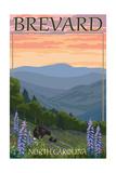 Brevard  North Carolina - Spring Flowers and Bear Family