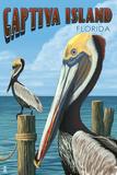 Captiva Island  Florida - Brown Pelican