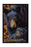 Colorado - Black Bears - Mosaic