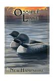 Ossipee Lake  New Hampshire - Loon Family