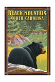 Black Mountain  North Carolina - Black Bear in Forest